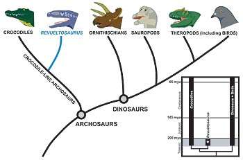 How dinosaurs re-sized.