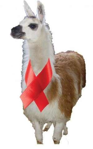 How llamas' unusual antibodies might help in the fight against HIV/AIDS