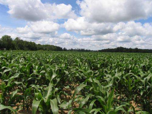 How much fertilizer is too much for the climate?