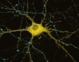 How our brains store recent memories, cell by single cell