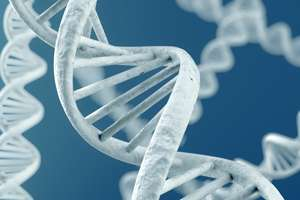 Humans may have benefited from mobile genetic element insertions