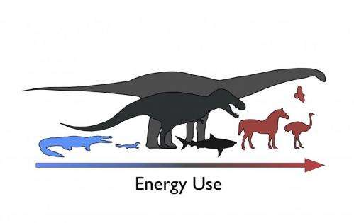 Mesothermy in the Mesozoic: Researchers untangle energetics of extinct dinosaurs