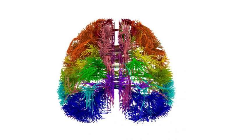Research showcases most comprehensive wiring diagram of mammalian brain to date
