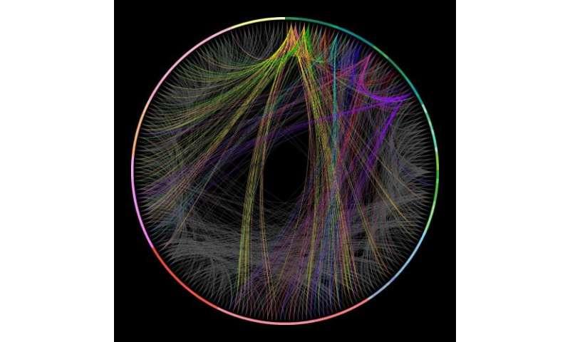 Wiring Diagram C Elegans from scx1.b-cdn.net