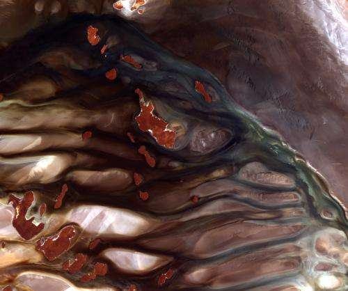 Image: Lake Gairdner from orbit