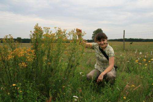 'Neighbor-plants' determine insects' feeding choices