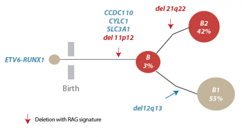 Immune system development linked to leukemia