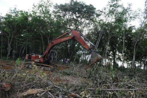 In Southeast Asia alone, up to one million hectares of forest is lost annually to agricultural expansion like palm oil plantatio