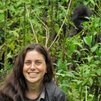 Investigating the health threats to endangered eastern gorillas