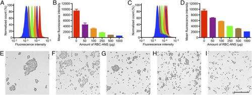 In vitro dose-dependent neutralization and stability of RBC-ANS/anti-RBC binding