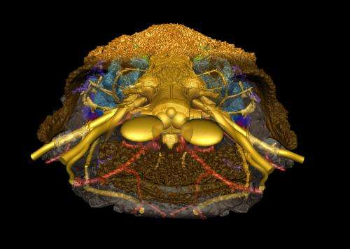 Jaw dropping: scientists reveal how vertebrates came to have a face