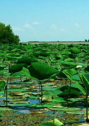 'Just right' plant growth may make river deltas resilient