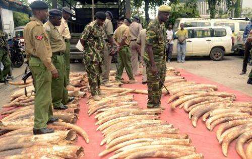 Kenyan police officers look on June 5, 2014 at 302 pieces of ivory, including 228 elephant tusks, found and seized the day befor