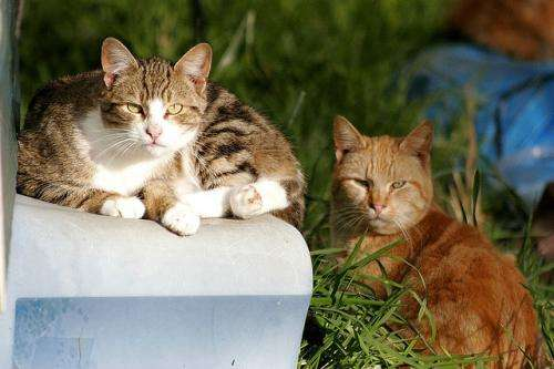 Killer cats linked to local extinctions