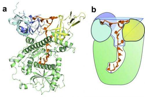 Knowing what to keep and what to trash: How an enzyme distinguishes cellular messages