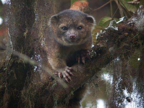 Scientists announce top 10 new species for 2014