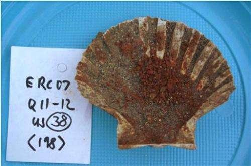 Latrines, sewers show varied ancient Roman diet