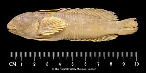 Letter from 1909 could solve missing fish riddle