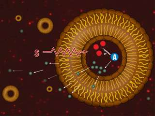 Liposome research adds up to better cancer treatment options