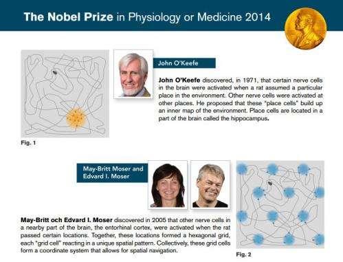 Trio win Nobel medicine prize for brain's 'GPS'