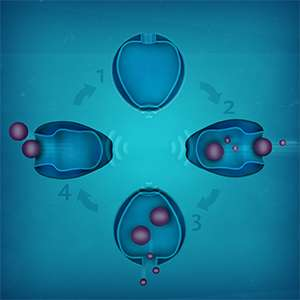 Magnetic field opens and closes nanovesicle