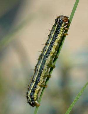 Many insect pests have survival strategies for cold weather