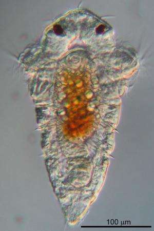 Marine tubeworms need nudge to transition from larvae state