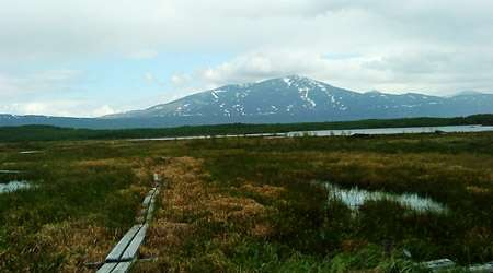 Methane-producing microbe blooms in permafrost thaw