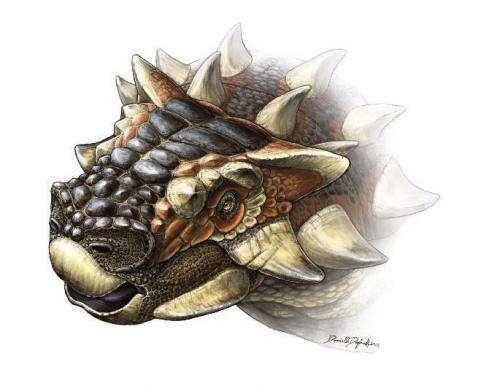Mongolian dinosaur with spiky helmet shows Gobi Desert was hotspot for ankylosaur diversity