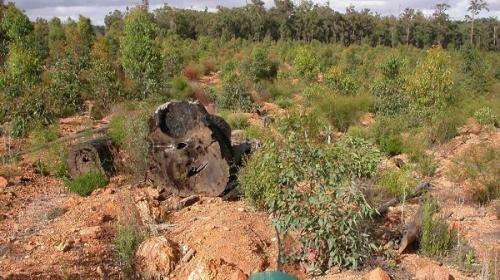 More habitat 'clumps' needed in restoration efforts