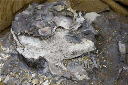 Museum rediscovers ancient skeleton in storage