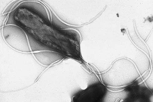 Mutations during initial infection allows bacteria to evade immune response