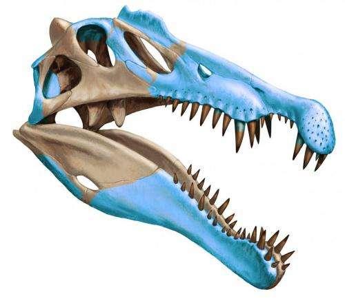 Shark-munching Spinosaurus was first-known water dinosaur