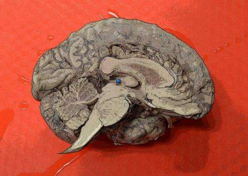 Neurobiology online course to attempt world's largest memory experiment