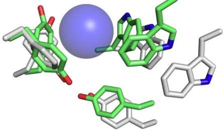 Neurotransmitter binding-site function revealed with unprecedented accuracy