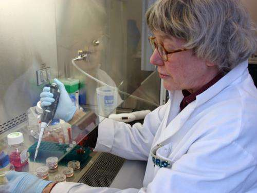 New cell line should accelerate embryonic stem cell research