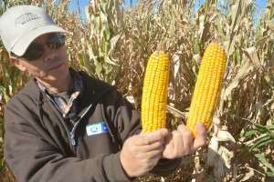 Newer hybrids with shorter maturity dates provide corn producers options