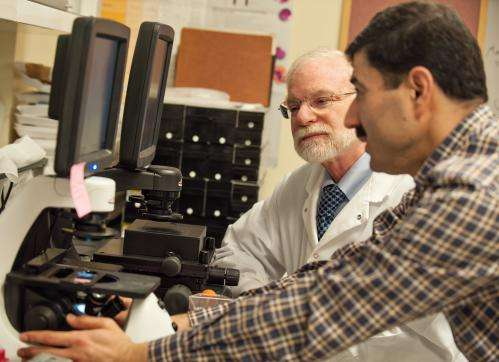 New finding points to potential options for attacking stem cells in triple-negative breast cancer