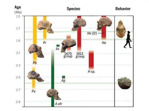 Scientists revise timeline of human origins