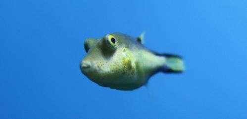 Ocean acidification leaving fish in the dark