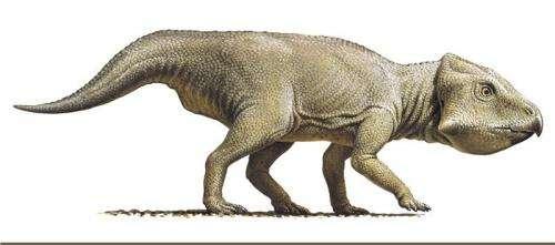 Of dinosaurs and mathematics