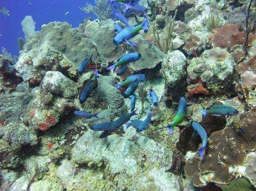 Older coral species more hardy, UT Arlington biologists say