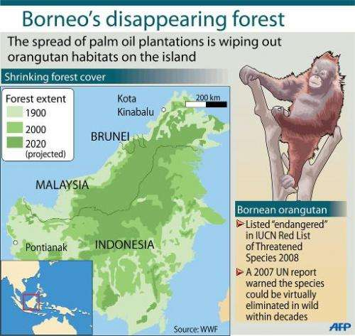 Orangutans are endangered by the spread of palm oil plantations on the island of Borneo, which is shared by Malaysia, Indonesia