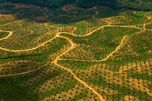 Palm oil sustainability body to expel non-compliant companies