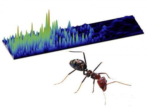 Particles, waves and ants