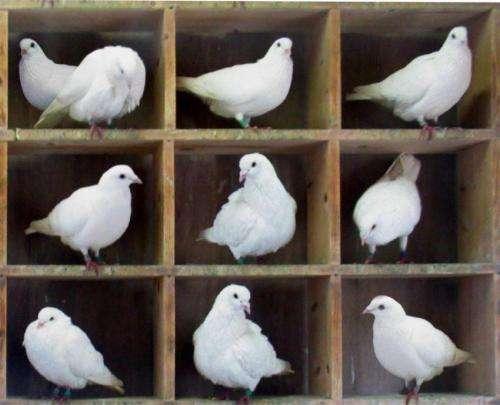 Physicists discuss quantum pigeonhole principle