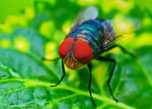 Physicists eye neural fly data, find formula for Zipf's law