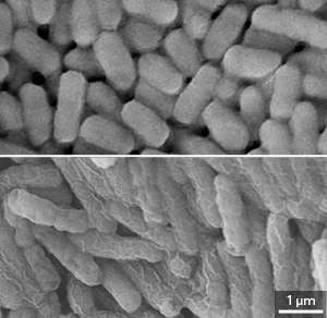 Polymers that can be fine-tuned for optimal effect could help fight multidrug-resistant infections