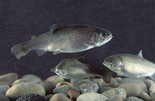 Process turns barley into high-protein fish food