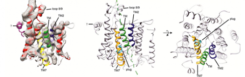 Protein structure: Peering into the transit pore